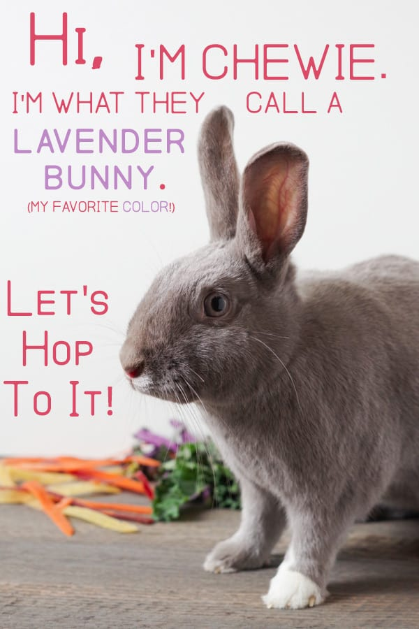 Lavender rabbit with rainbow carrots and greens