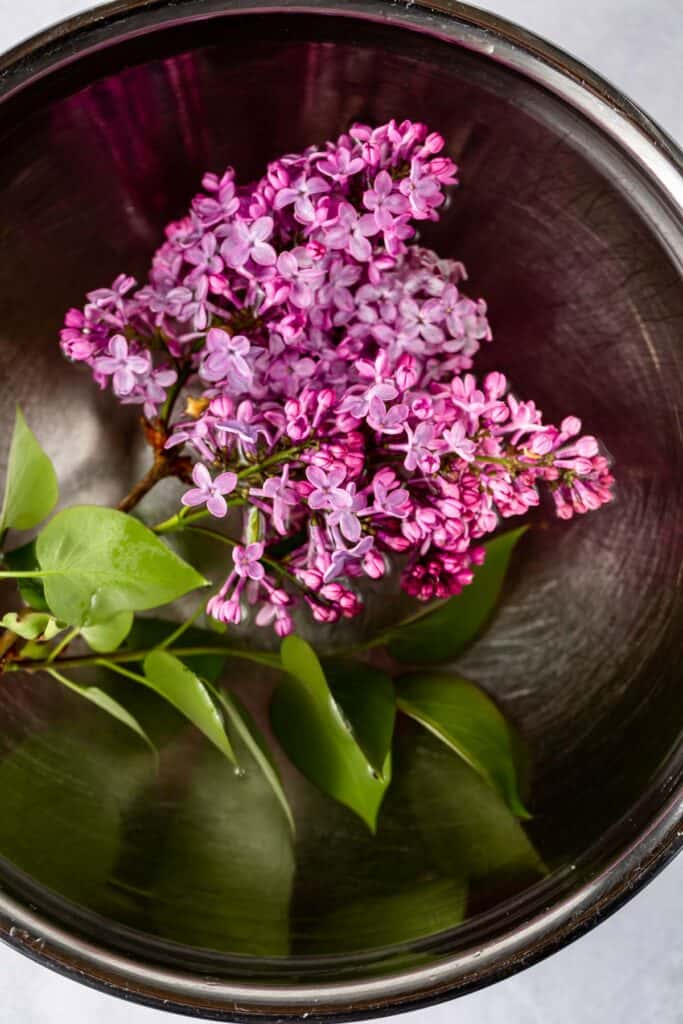 Lilacs soaking in a stainless steel bowl